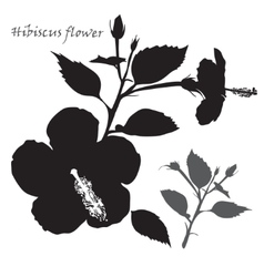Hibiscus flower Black silhouette on white vector image vector image