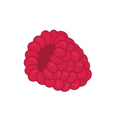 Raspberry delicious fruit vector