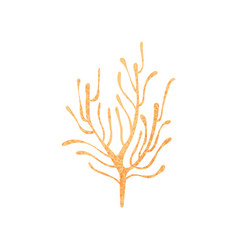 small branching coral ocean plant nature and vector image