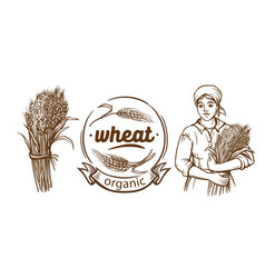 wheat ears hand drawn set isolated vector image