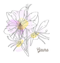 pink beautiful gaura on white background vector image vector image