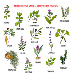 best herbal remedies for dementia vector image