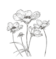 Hand drawn with cosmos flowers vector