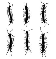 millipedes vector image
