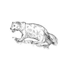 NX wolverine sketch vector image