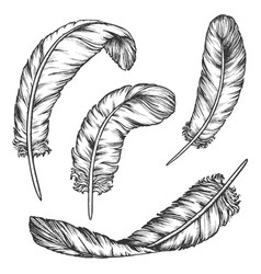 set isolated writing quill sketch bird feather vector image