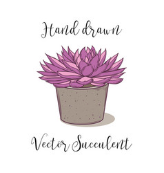 colorful succulent plant in a concrete flower pot vector image
