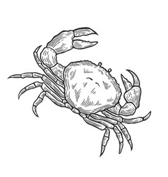 Crab hand drawn vector