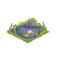 Isometric cartoon water pond with wild reeds and vector