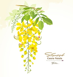 National flower of thailand Cassia Fistula vector image