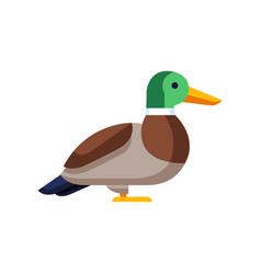 Stylized duck image of wild bird vector