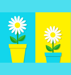 White daisy chamomile icon set flower pot cute vector