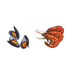 sketch crayfish lobster mussels set vector image