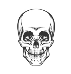 The Skull vector image