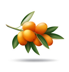 kumquat branch with orange fruits and green leaves vector image vector image