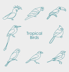 Tropical birds icon vector