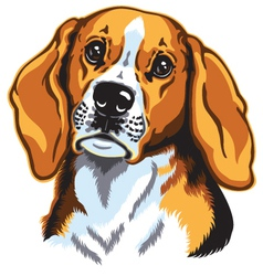 Beagle head vector