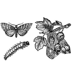 butterfly zophodia convolutella vector image