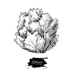 Lettuce hand drawn Vegetable engraved vector image