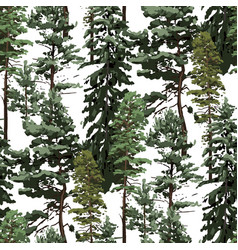 Repeated seamless pattern various coniferous vector