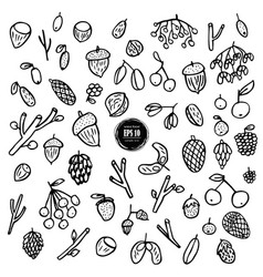 set nuts cone seeds hand drawn vector image