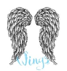 sketch of wings vector image