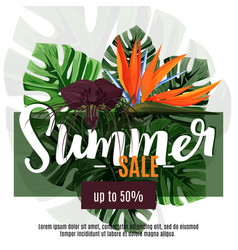 Summer sale design template tropical exotic vector