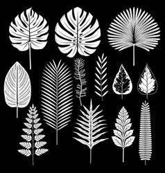 Tropical leaf silhouette set vector