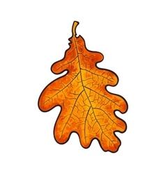 Beautiful orange colored autumn oak leave isolated vector image