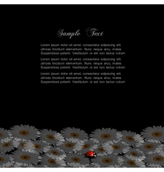Stylish black background with chamomile and vector image vector image