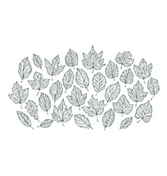 decorative leaves sketch hand drawn vector image