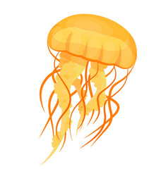 jellyfishes or medusae yellow underwater animal vector image