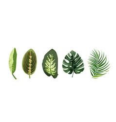 set tropical leaves monstera dieffenbachia vector image