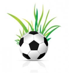 vector soccer ball vector image