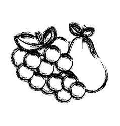 contour grape and pear fruits icon vector image vector image