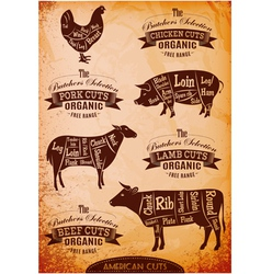 diagram cut carcasses of chicken pig cow lamb vector image