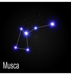 Musca Constellation with Beautiful Bright Stars on vector image