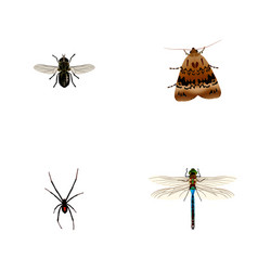 Set of bug realistic symbols with dragonfly moth vector