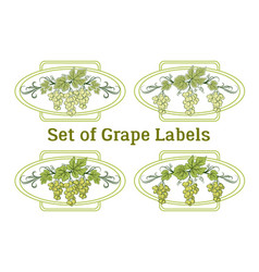 Set of grape labels vector