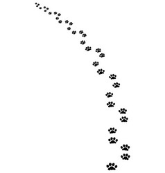 trail dog vector image