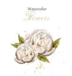 Watercolor white peonies isolated vector