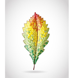 Autumn colorful leaf vector image
