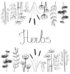 hand drawn set with black and white herbs vector image vector image