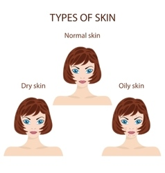 Types of skin Oily normal and dry vector image