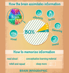 cartoon human brain infographics vector image