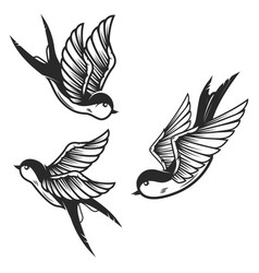 set of swallow birds on white background design vector image