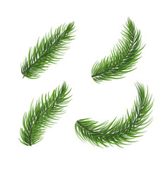 set pine tree branch fir tree christmas wreath vector image