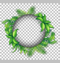 transparent round frame with tropical leaves vector image