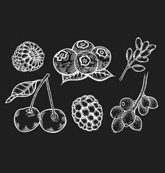 berry hand set vector image vector image
