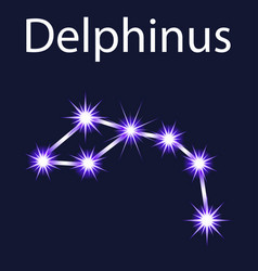 Constellation delphinus with stars in the night vector